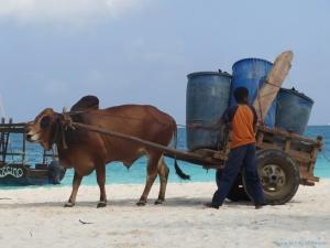 """""""Horse & Cart"""""""